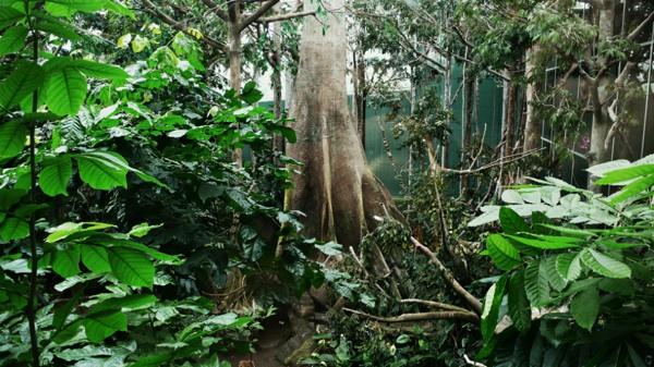 Esto Pasaría Si Volvieran A Crecer Los Bosques Talados De La Amazonía