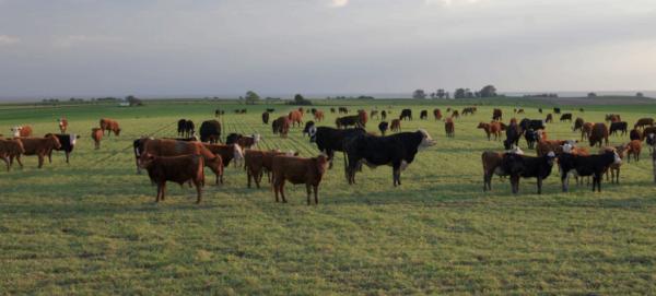 Se Constituyó La Mesa Argentina De Carne Sustentable
