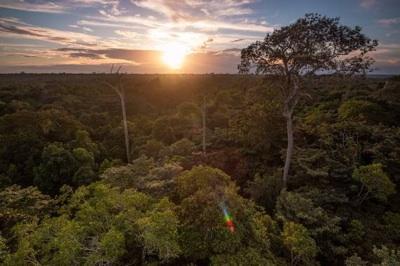 El Amazonas Boliviano, De Camino A La Deforestación