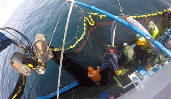 Ambientalistas 'en Pie De Guerra' En Contra De La Pesca Eléctrica