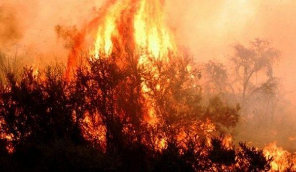 El Incendio Forestal En El Parque Nacional Lihué Calel Ya Afectó Siete Mil Hectáreas