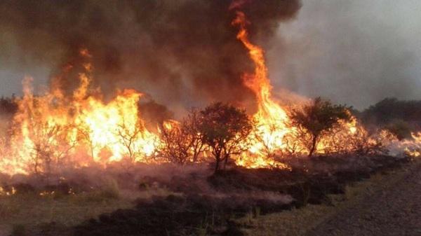 Incendios En Mendoza Ya Consumieron 30 Mil Hectáreas