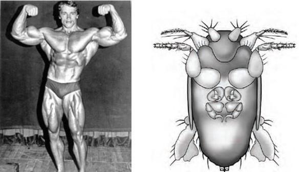 La Mosca Más Pequeña Del Mundo Llevará El Nombre De Schwarzenegger