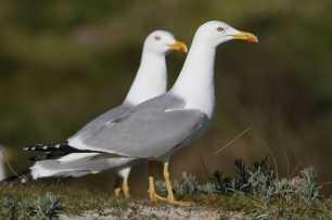 Los Excrementos De Las Aves Marinas Transforman La Composición De Los Suelos, El Agua Y La Vegetación