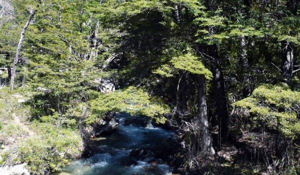 Se Creó El Fondo Fiduciario Para La Protección Ambiental De Los Bosques Nativos