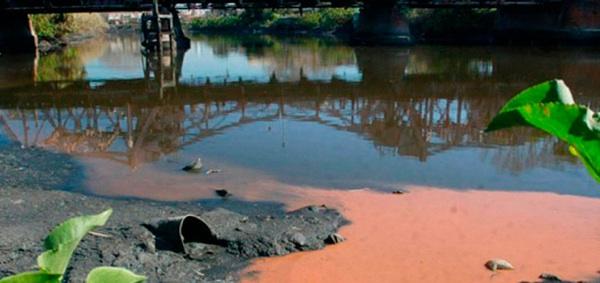 Bacterias, Las Principales Aliadas Para Descontaminar Los Suelos
