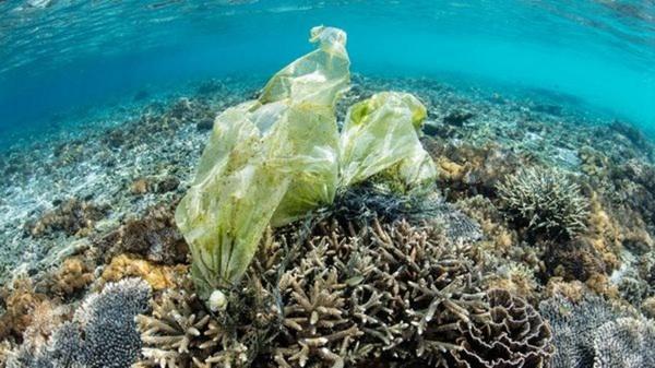 Desechos Plásticos En Océanos Disparan Riesgo De Enfermedades En Corales