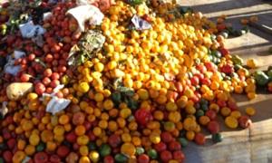 El 42 % De Los Residuos Pueden Transformarse En Abono Para Huertas