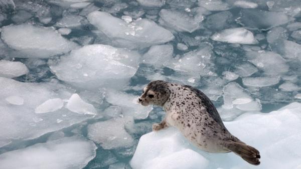 ¿El Mismo Clima En Ecuador Que En La Antártida? Es Posible Según 'Nature'