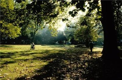 Las áreas Verdes Pequeñas Y Medianas En Las Ciudades Proveen Efectos Beneficiosos De Enfriamiento
