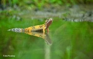 Las Especies Exóticas Invasoras Siguen Aumentando En El Mundo