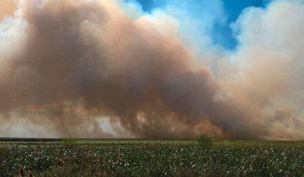 Más De Mil Hectáreas Se Incendian En La Reserva De Punta Lara