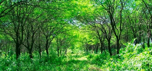 San Luis Toma Medidas Para Proteger Sus Bosques Nativos