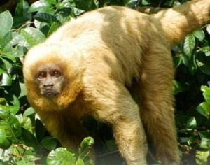 Urge Investigar Mejor El Impacto Del Ecoturismo Sobre La Fauna, Sostiene Una Experta