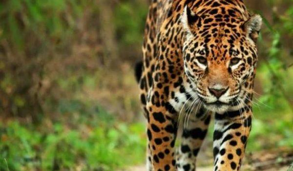 En México 40% De La Fauna Ha Desaparecido En últimos 30 Años