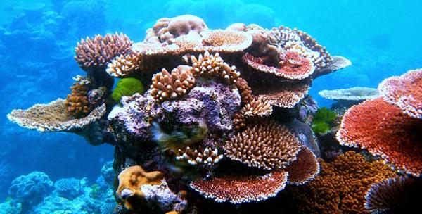 La Mayoría De Los Corales Perderá Uno De Sus Componentes Básicos En 2050
