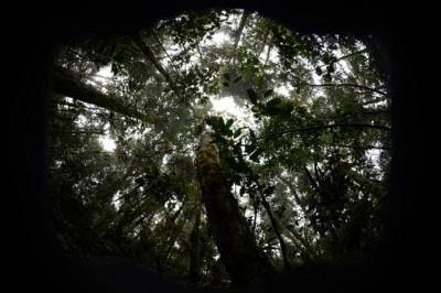 Un Estudio Evidencia El Impacto Humano Sobre La Estructura Y Funcionalidad De Los Bosques Tropicales