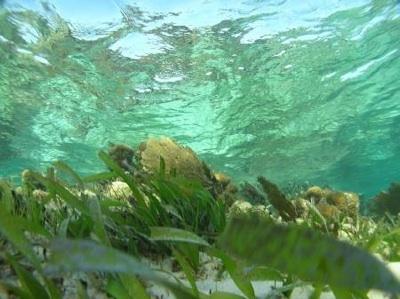 Una Red De Investigadores De Latinoamérica Estudia La Acidificación Del Mar Caribe