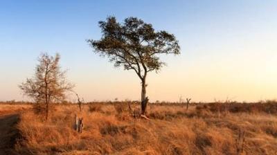 Datos Satelitales De Microondas Muestran Pérdidas De Carbono En Zonas áridas Africanas Ocasionadas Por El Cambio Climático