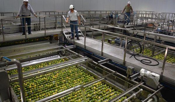 Ledesma Inauguró Una Planta De Aceites Esenciales