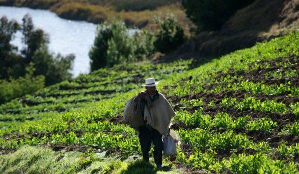 La ONU Promete Reforzar La Agroecología