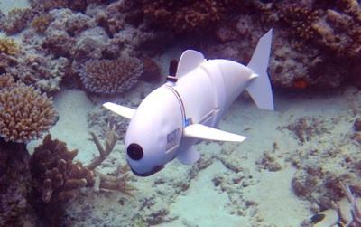 Un Robot Espía Para Salvar Los Arrecifes