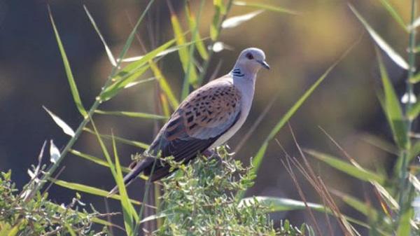 Una De Cada Ocho Especies De Aves Del Planeta, En Riesgo De Extinción