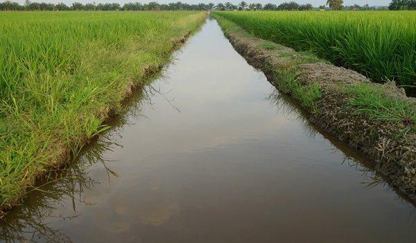 Agricultura Y Ganadería Son Las Actividades Primarias Que Más Contaminan El Agua, Recuerda La FAO