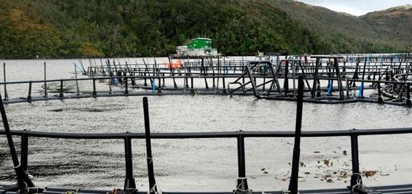 Aprueban Instalar Salmoneras En El Mar Argentino. Debate Por El Daño Ambiental