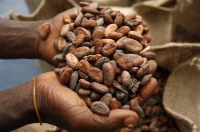 India Versus Monsanto: Las Semillas No Se Pueden Patentar
