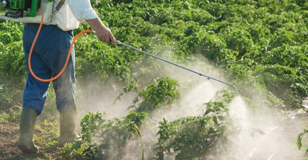 Médico Español Asegura Que La Causa Principal De Cáncer Son Los Alimentos Con Agroquímicos