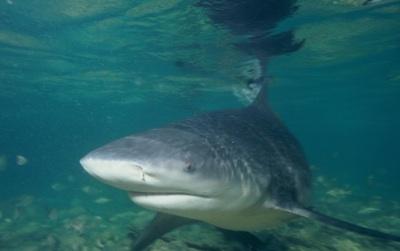 ¿Por Qué Se Están Yendo Especies Marinas Del Océano Tropical?