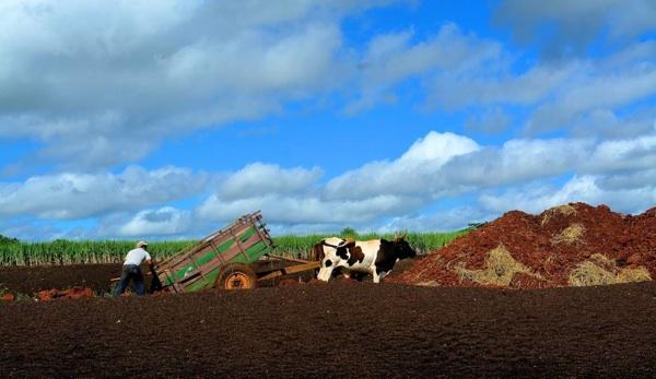 ¿Será La Agroecología El Futuro De La Alimentación?