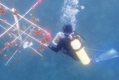 Con una nueva técnica los corales se pueden restaurar - Argentina Ambiental