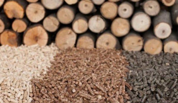Especialista Destacó El Gran Potencial De Misiones Para Generar Energía A Través De Biomasa