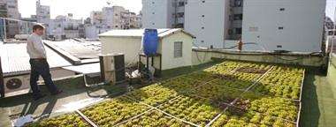 En Buenos Aires No Sobra El Verde