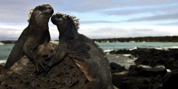 Expertos Analizan En Galápagos Control De áreas Marinas Protegidas En El Pacífico