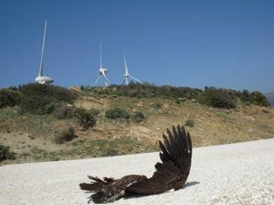 Riesgos De Los Parques Eólicos Para La Mortalidad De Las Aves