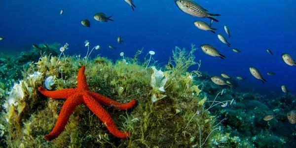 Tesoro De Biodiversidad Marina Fue Descubierto En El Mediterráneo