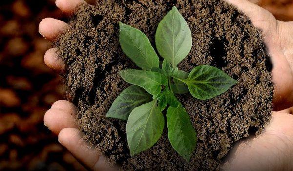 10 Formas En Que Las Empresas Contribuyen Con El Medio Ambiente