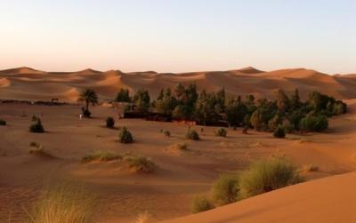 Así Puede Reverdecer El Desierto Del Sahara