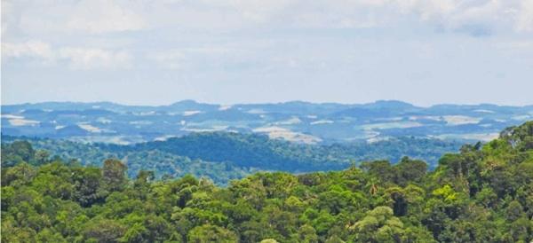Buscan Conservar Los Sectores De La Selva Misionera En Tierras Privadas