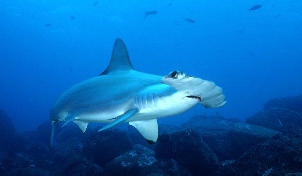 Comienza En La ONU La Negociación De Un Gran Tratado Mundial Para Proteger Los Océanos
