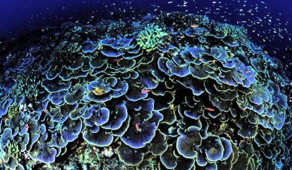 Hallan Una Nueva Especie De Coral