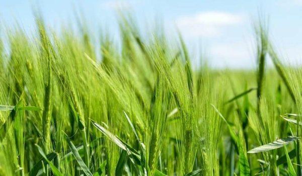 """La Agricultura De """"Alto Rendimiento""""  Cuesta Al Medio Ambiente Menos De Lo Que Se Pensaba, Y Podría Ayudar A Preservar Hábitats"""