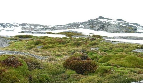 La Vegetación De La Antártida Oriental A Merced Del Cambio Climatico