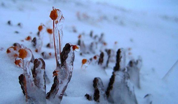 Las Plantas Del Ártico Las Grandes Beneficiadas Por El Cambio Climático