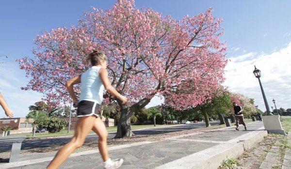 Santa Fe: Con Fondos Provinciales, Plantaron Más De 50.000 árboles Nativos
