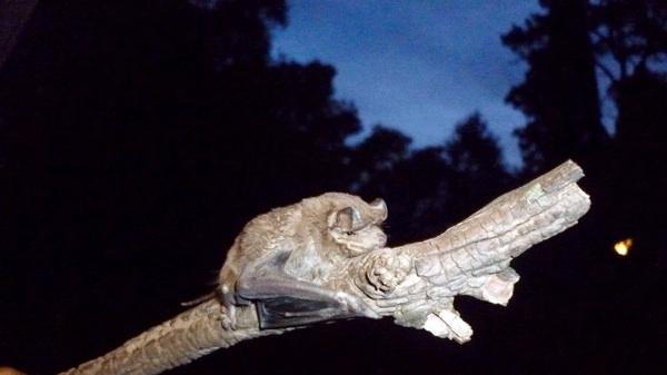 Conservación De Murciélagos: Un Esfuerzo Internacional Con Gran Participación De Argentina