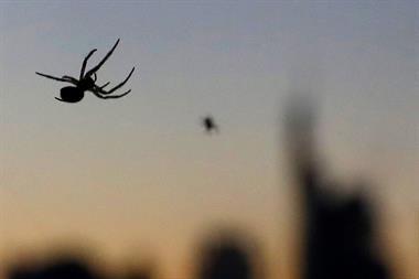 Hallan Más De 200 Especies De Arañas, 17 Inéditas En Argentina, En Ecosistema De Corrientes